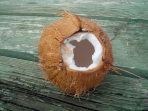 coconut-1324226-640x480